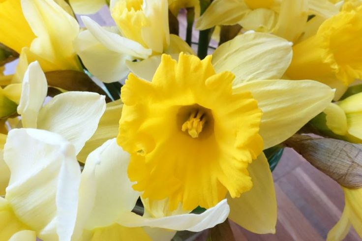 HappyFace313 daffodils Narzissen  http://wp.me/p5WtEB-3iC