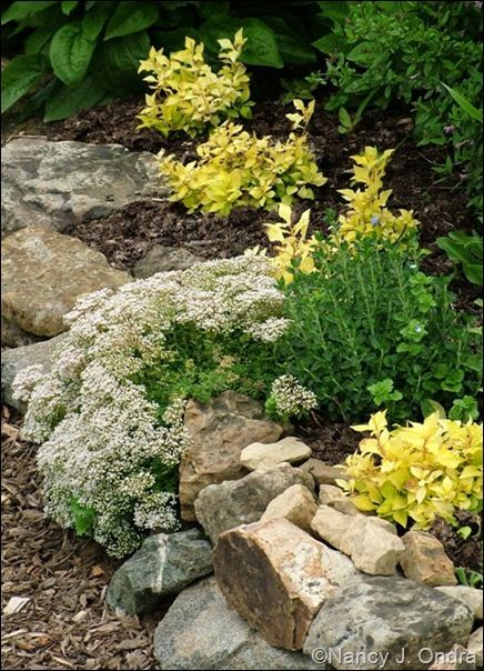 garden bloggers design workshop walls and fences revisited - Rock Wall Garden Designs