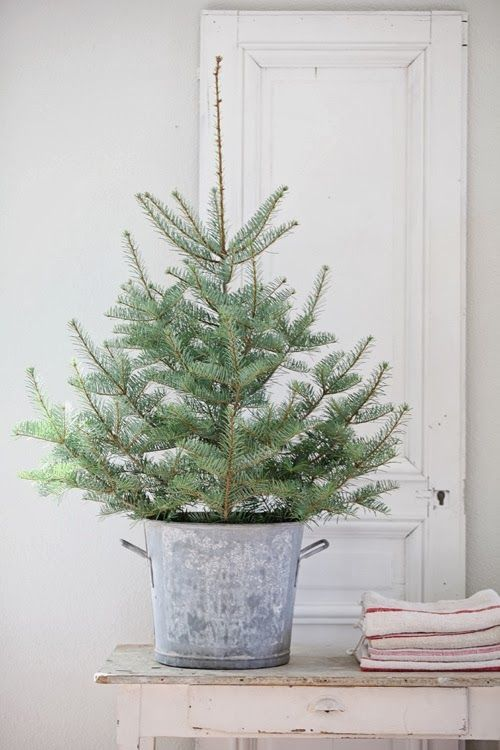 "Love This!!    I actually have 3 small (12""tall) trees in metal buckets and I have a couple 3 foot tall trees that I typically place on either side of the deck door.  Will send pictures of them tomorrow."