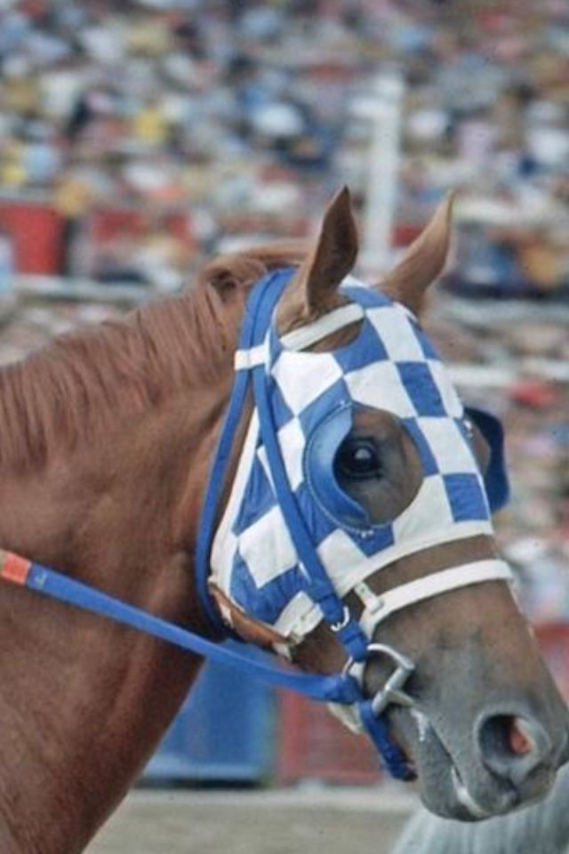 Secretariat. The Sport of Kings is now all but dead, the 70's the end of Horse Racing's Golden Era. We need another super horse and Triple Crown winner like Secretariat...now!