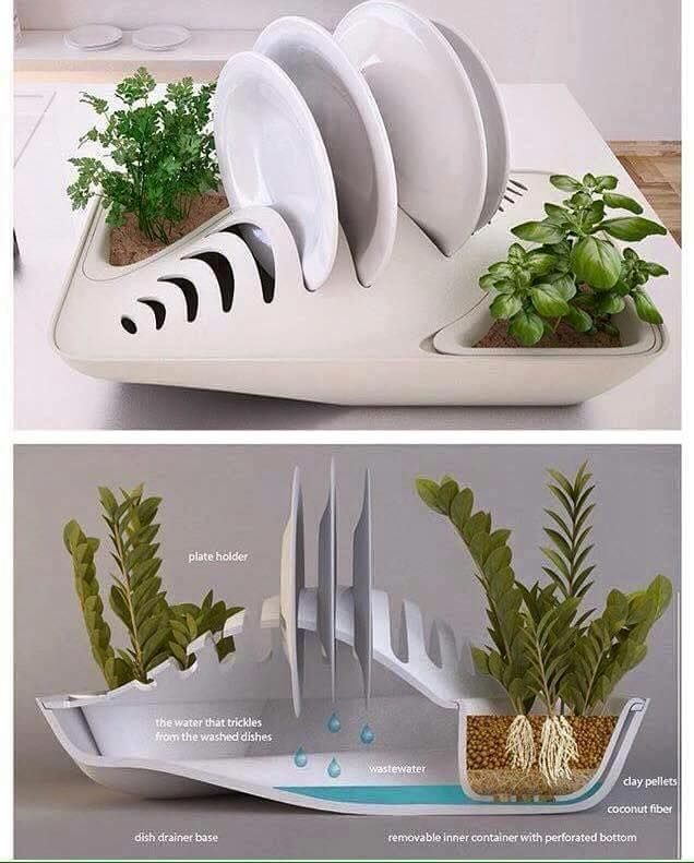 Eco-friendly/ plant grower/ dish strainer! LOVE IT! #kitchenideas #ecofriendly #dreamhome