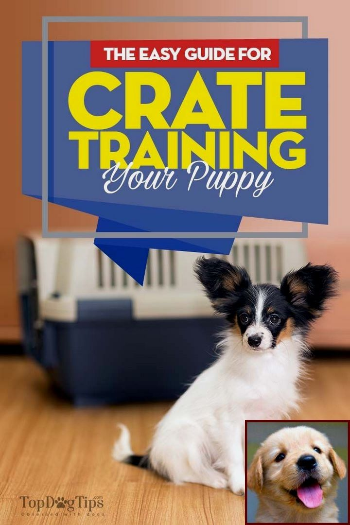 House Training A Puppy Mill Dog And Training Dogs With A Clicker