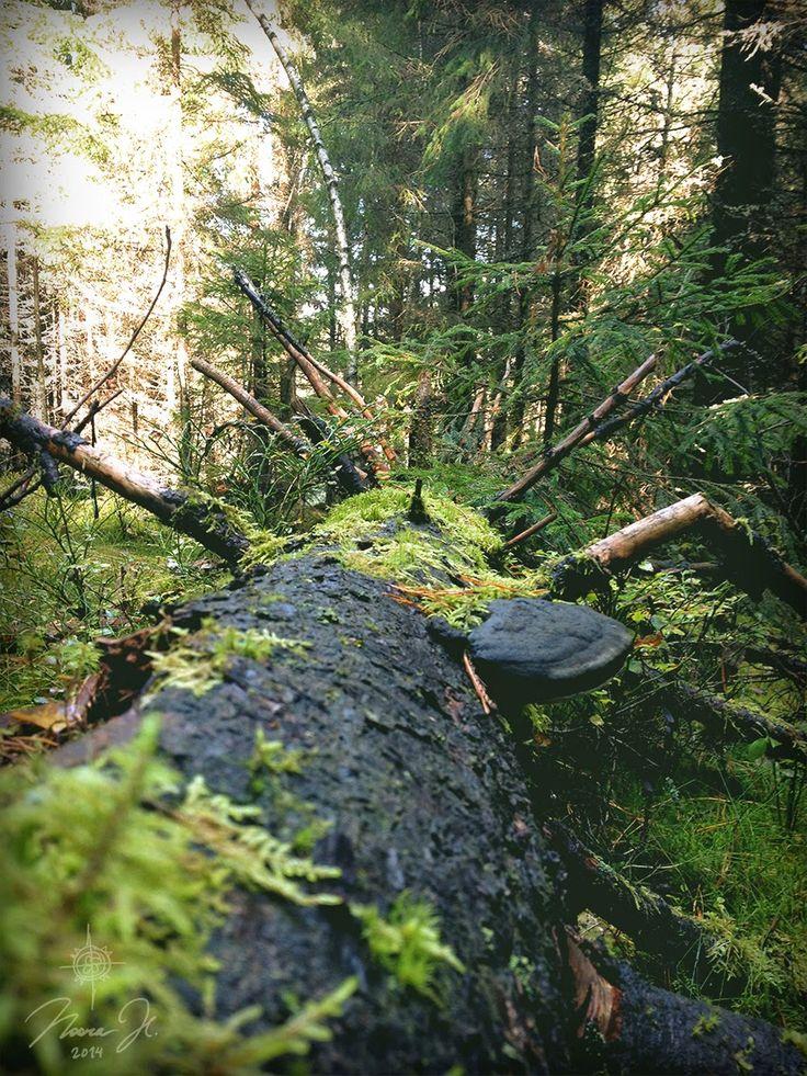 Moss on a fallen tree trunk