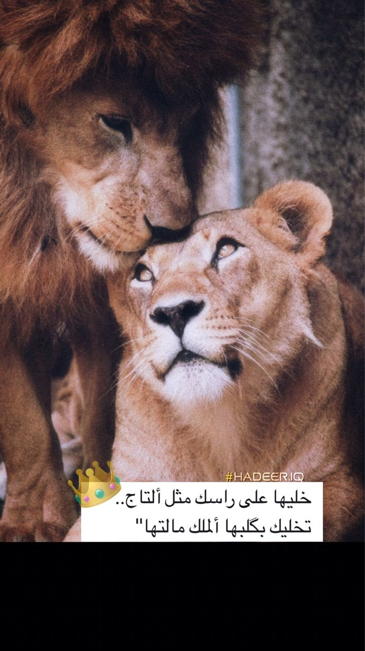 حب زواج رمزيات اسد لبوه Love Quotes Wallpaper Arabic Love Quotes Love Quotes