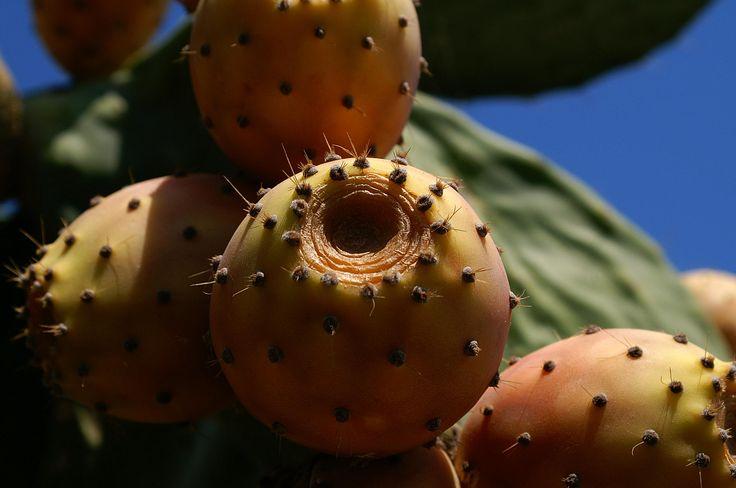 Photograph Fruit of a cactus by Áron László Szűcs on 500px