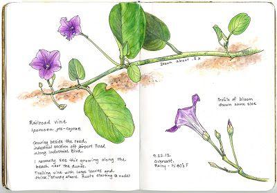 A Nature Art Journal in Southwest Florida - Elizabeth Smith