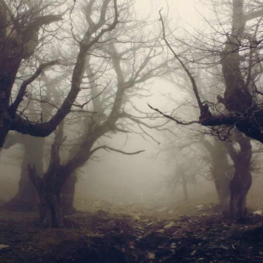 Paranormal mist. Are you waiting to see what will emerge from the fog? I am...