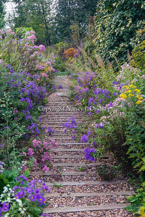 A timber-and-gravel garden path lined with New England asters (Symphyotrichum novae-angliae) and other perennials and grasses, leading through a fall garden