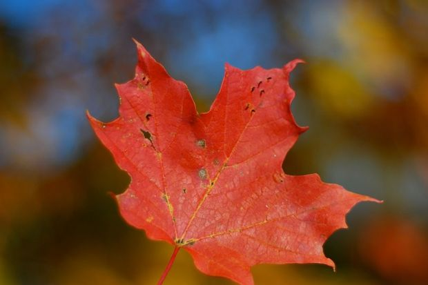 Do you think you're a Canadian trivia buff? Take our quiz to find out!