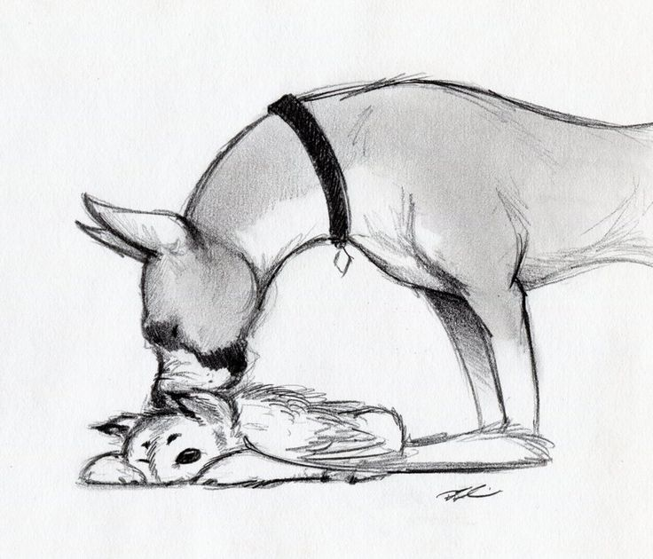 More boxer with baby owl griffin by RobtheDoodler.deviantart.com on @deviantART