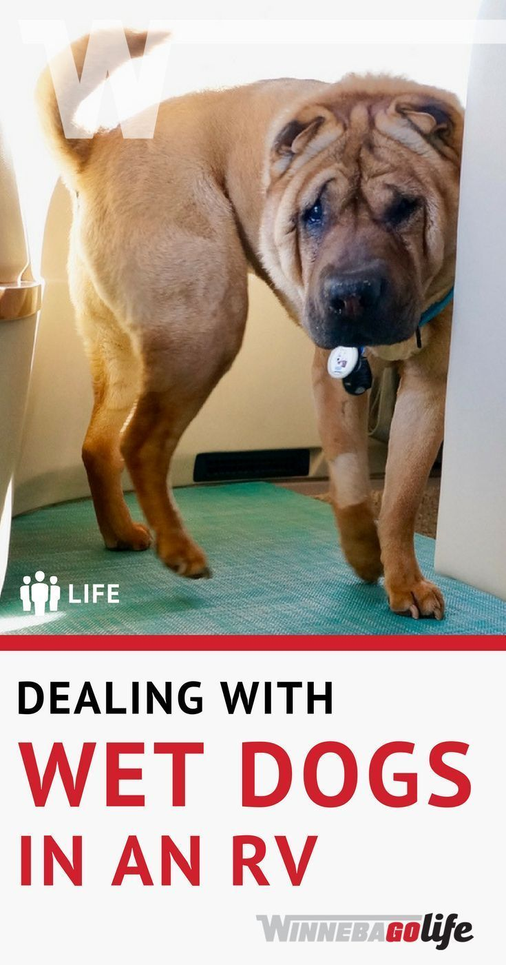 Dealing With Wet Dogs In An Rv Rving Pet Friendly Pinterest Rv