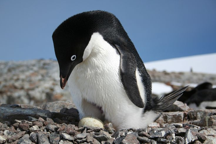 A new interactive and user-friendly website that tracks Antarctic penguin populations and provides information for scientists to better understand environmental changes will now be accessible to the general public. The new tool, developed  by Heather J. Lynch, PhD, an Associate Professor of Ecology and Evolution, and colleagues internationally, is the first of its kind giving citizen scientists a lens into the world of scientists seeking to impact global environmental change by way of…