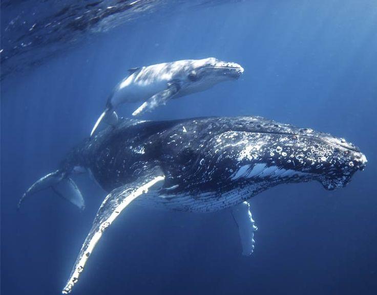 Best  Dolphin Mammal Ideas On   Animals Sea Dolphins