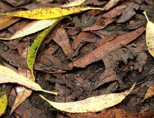Humus généré par la décomposition de feuilles mortes