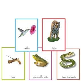 Cartes « classes animales »