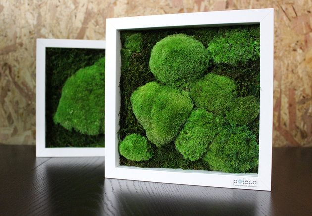 Numărul de martie igloo aduce natura mai aproape! Comandă-l online și câștigă tabloul Poteca Studio! - igloo.ro
