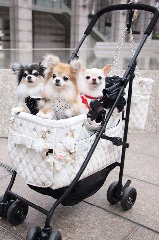 【楽天市場】Mother Cart(マザーカート) アジリティー RUPYコラボカート (ホワイト)【小型犬 キャリーバッグ/ キャリーカート/ ペットカート/ ペットバギー/犬用品/ 送料無料】:TIARA PETS