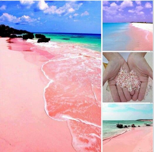 Pink sand beaches Bahamas really pink advise