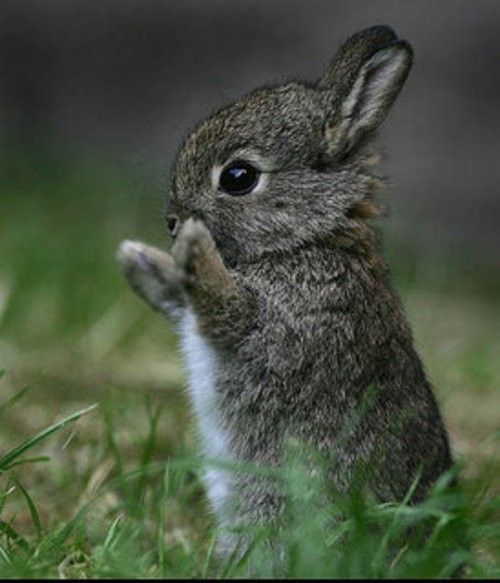 :)how cute ,I think he may be praying or clapping at his siblings