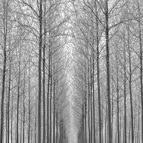 Equilibrium by Doug Chinnery - art print from kingandmcgaw.com