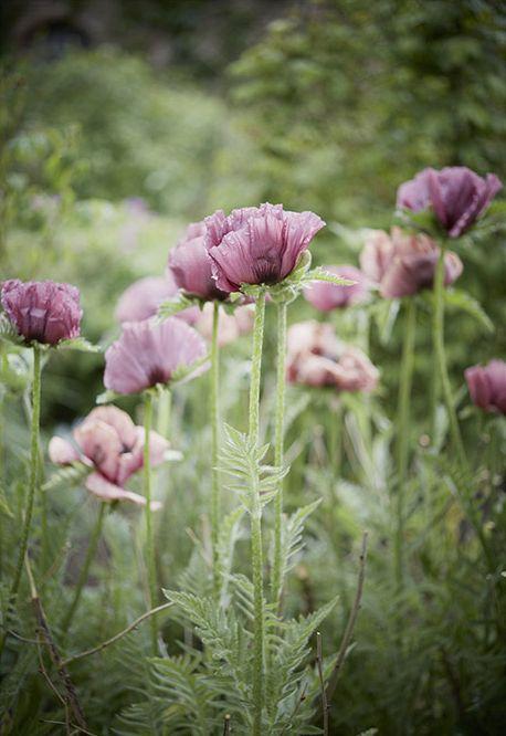 floral design - sholder
