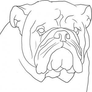 how to draw a cute bulldog