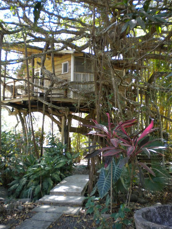 106 best tree houses images on pinterest tree houses for Costa rica tree house rental