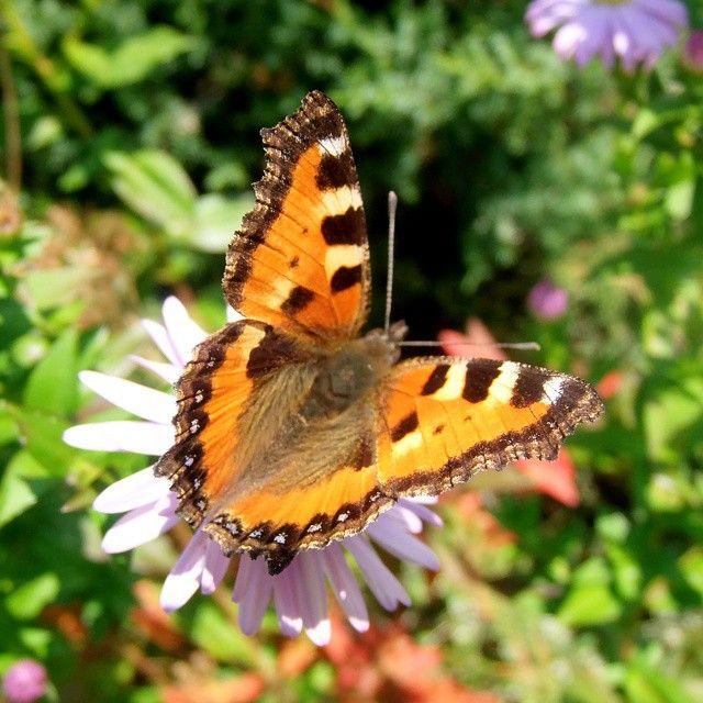 #butterfly #beautiful #green #garden #colours #orange #nature #Poland #love@instanature_789#lubiepolske