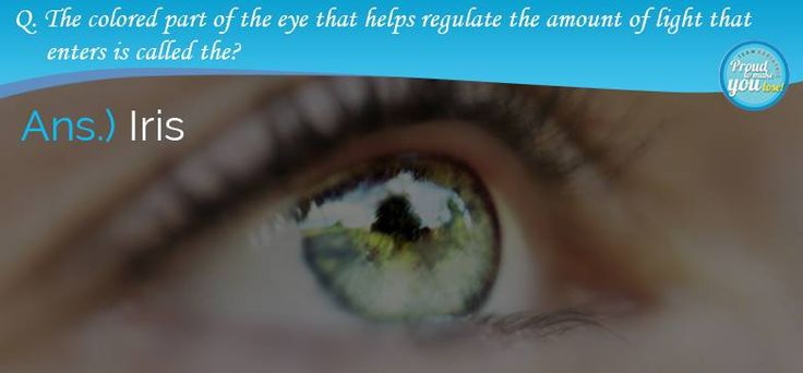 The colored part of the eye that helps regulate the amount of light that enters is the Iris. Other parts of the eye and their functions are: Cornea: the transparent, protective front part of the eye that refracts (or bends) light and helps you focus Pupil: the hole in the center of the iris that regulates how much light is let into the eye Lens: a transparent, biconvex (curved outward on both sides) that helps light focus onto the retina Retina: a nerve layer at the back of the eye that is…