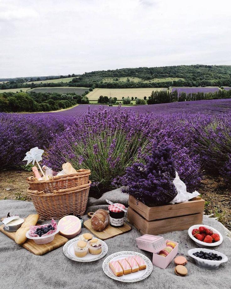 pretty French picnic in a lavender field