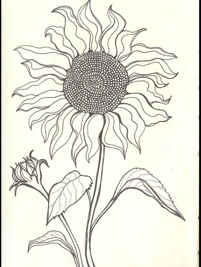 483 best coloring book flowers mandalas images on pinterest flower drawings  drawing Filigree Coloring Book  Beth Lily Coloring Book
