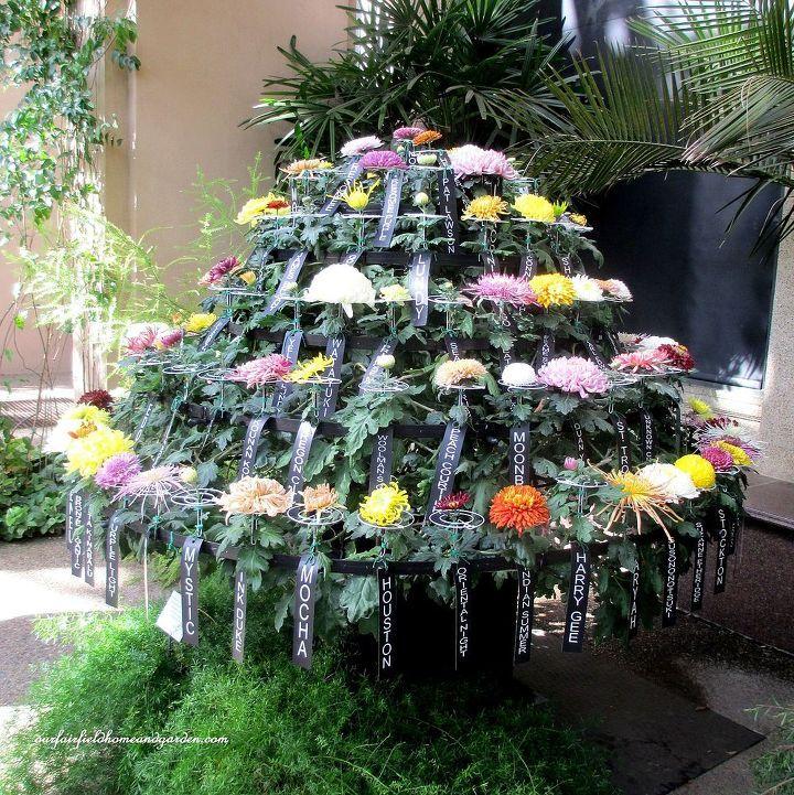 Chrysanthemum Festival At Longwood Gardens In 2020 Longwood Gardens Chrysanthemum Chrysanthemum Growing