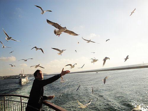 İstanbul, Vapur, Martı, Simit… (by Yunus Emre Aydoğan)      IleftmyheartinIstanbul.com