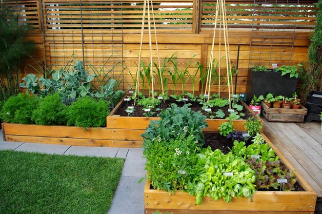 Raised garden beds with multiple levels
