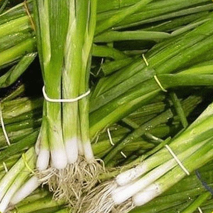 planting green onion seeds