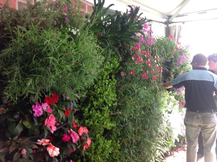 Eco Gardens Bondi, exhibiting again at the Sydney Flower & Garden Show 2014