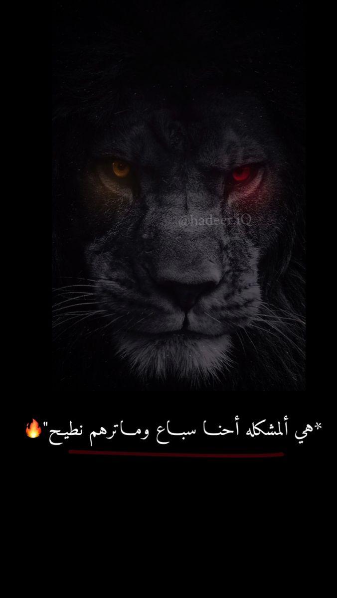 Lion اسد Beautiful Arabic Words Funny Arabic Quotes Romantic Words