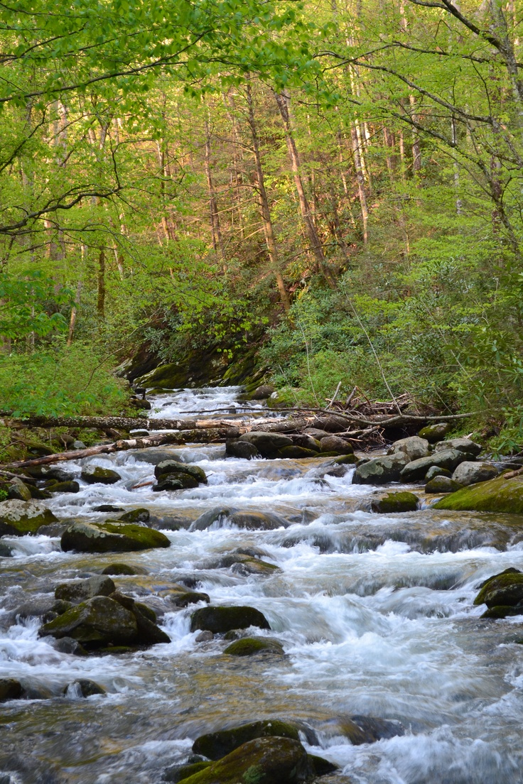 stream in the mountains - photo #21