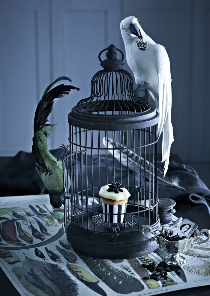 Cupcake and parrots