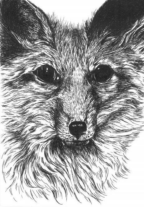 Foxy! Available as a greetings card - this is not a print, but an original ink drawing