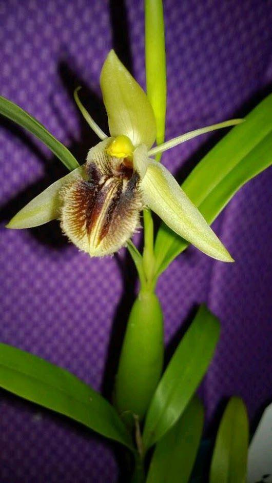 Orquídeas y Otras https://plus.google.com/communities/102288324998809155692 #...