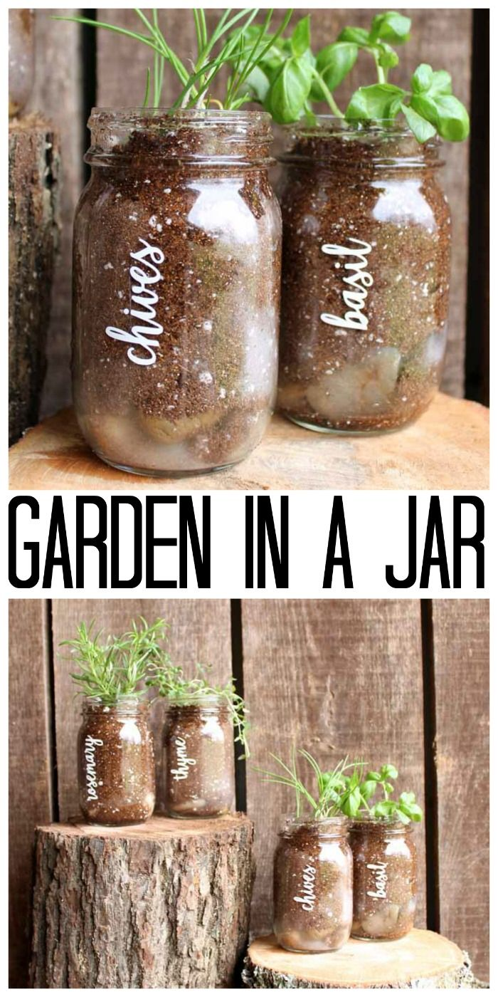 Garden in a Jar Grow Your Herbs