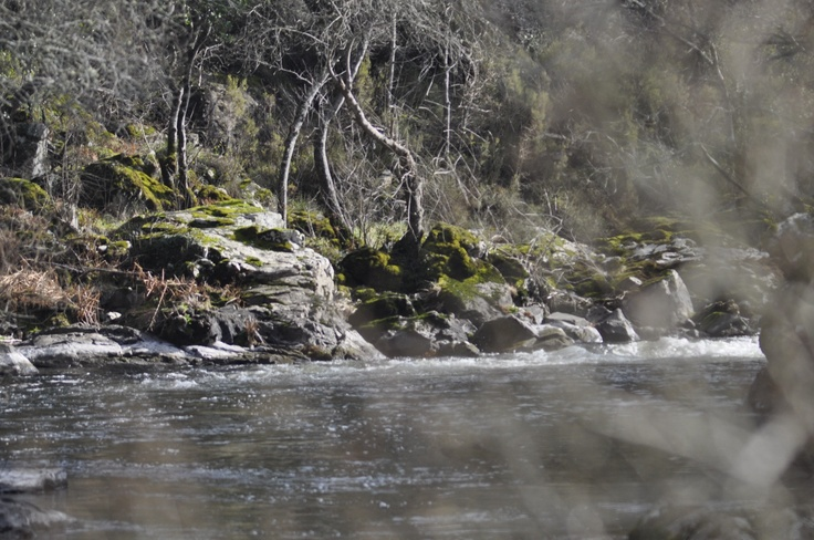 El río Ulla.   Ulla river,  A Pena (Santiso- A Coruña)