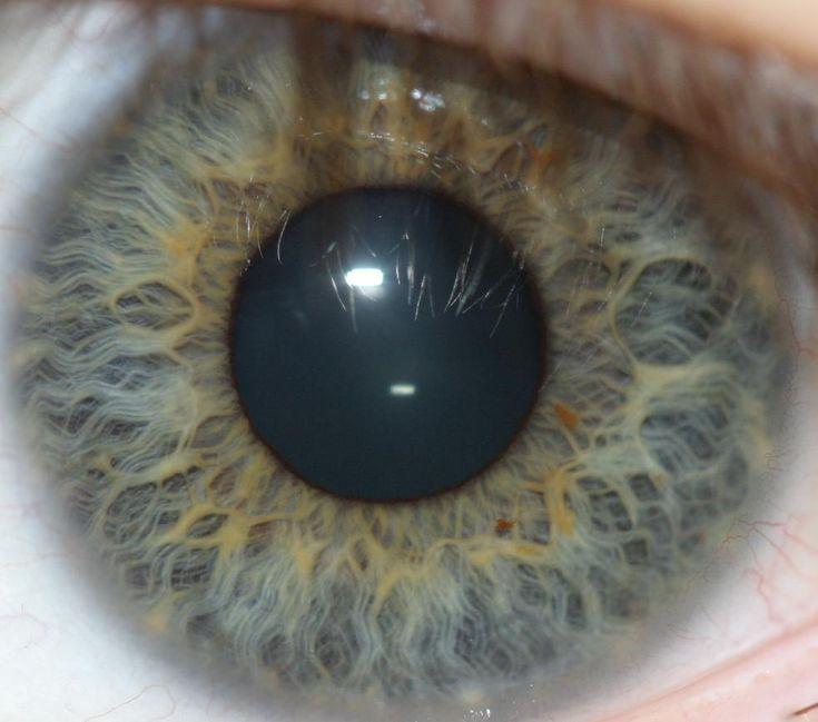 eye detail patterns - Google Search