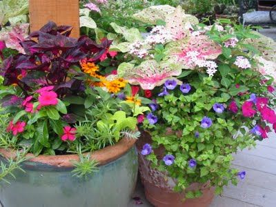 When Planting Containers Remember That You Want A
