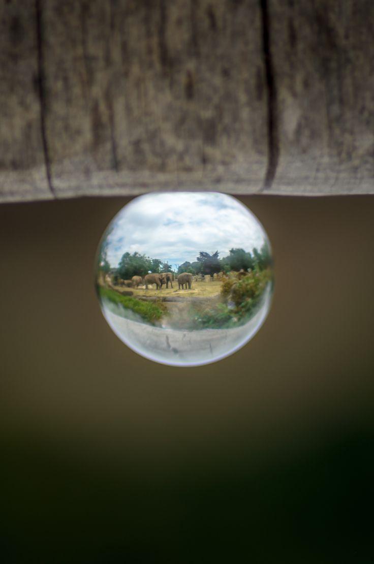 Glass ZOO by Marek Weisskopf on 500px