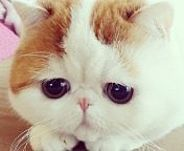 I don't even care what this pin links to.  I want this cat for Christmas.