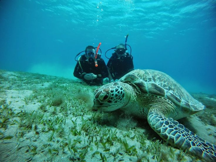 Red Sea Turtle Project: Close encounters in Marsa Assalaya