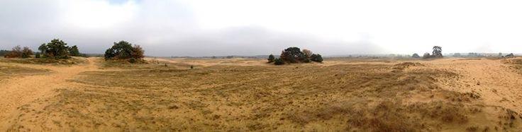 Kootwijkerzand is de plek voor een mooie wandeling te voet of te paard! Foto: Daniëlle van de Ruit.