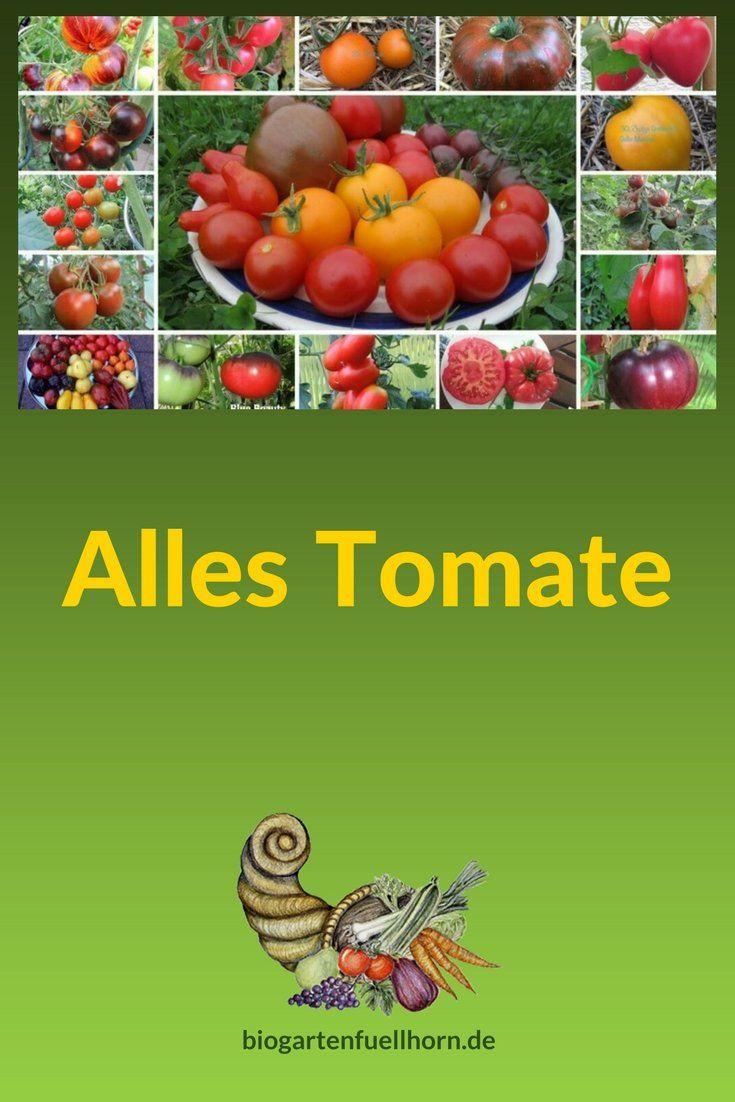 Tomate Set 1 Tomatensamen 20 alte Sorten Fleischtomaten Cherrytomaten Mix Samen